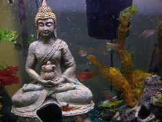 Aquarium Boeddha is een prachtig aquarium decoratie stuk. Geeft gelijk een hele andere uitstraling mee aan het aquarium. Aanrader!