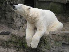 Polar Bear by ~Guthixx on deviantART