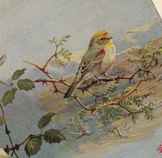 Antique 1930 Allan Brooks Natural History Lithograph Featuring Woodland and Forest Birds