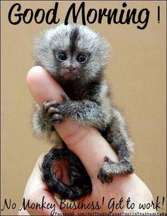 Love finger monkeys!
