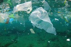 2050 mehr Plastik als Fisch im Meer - Studie prognostiziert – | ||| | || CODECHECK.INFO