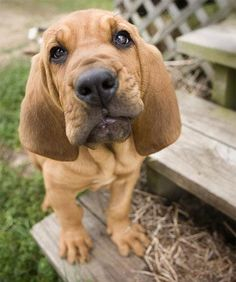 I want a dog like this!!! Then I'm going to name him Copper from Fox and the Hound. :)