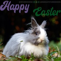 May you feel the hope of new beginnings, love and happiness during this joyful Easter season. Easter Wishes, Easter Season, New Beginnings, Joyful, Happy Easter, Blessed, How Are You Feeling, Happiness, Peace