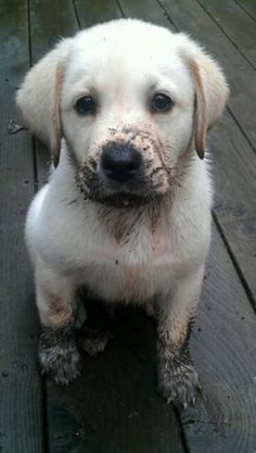 Mucky pup!