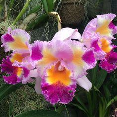 Perennial beauty Duke Farms Orchid Range Hillsborough New Jersey: dukefarms.org. Fee admission. Winter hours: Mon. & Tues. 8:30-4:30 closed Weds. Thurs.-Sun. 8:30-4:30. #Hillsborough #GardenState #NJ #NewJersey #PA #US #USA #holidays #ThreeKings #DiadeLosReyes #LittleChristmas #Epiphany #HappyNewYear #winter #snow #orchid #style #fashion #flowers #flowersofintagram #travel #travelgram #instatravel #instadaily #instagood