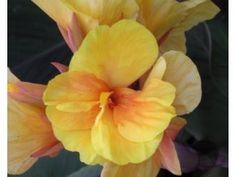 Cibuloviny - Zahradnictvi Spomyšl Plants, Plant, Planets