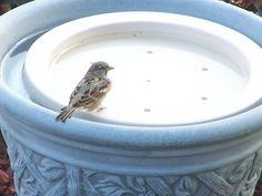 Turn any pot or deep bowl into a birdbath!  Bird Bath Raft