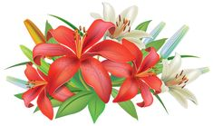 Red Lilies Flowers Decoration PNG Clipart Image