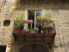 Palermo, un balcone con pianta di limoni