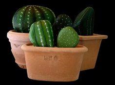 Cactus Rock Art