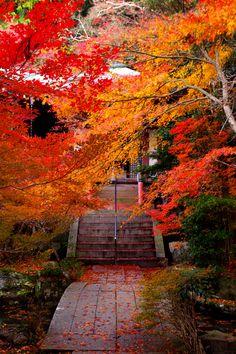 """Autumn """""""