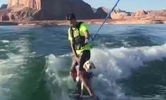 Six-month-old Labrador has a go at wakeboarding with her owner Wakeboarding Girl, Offshore Wind, Six Month, Point Break, Most Popular Dog Breeds, Water Photography, Big Challenge, Big Waves, Labrador Retriever