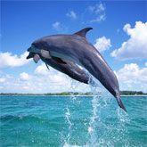 Underwater Sea Life-AmO Images-AmO Images