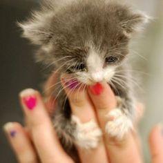 Tiny tiny kitty