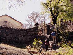 dog trek Mount Abu, Trek, Couple Photos, Dogs, Doggies, Couple Photography, Dog, Couple Pics