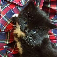 #black #and #white #kitten #checker #petstagram #animal #sad #eyes #kittensfarm Black Kittens, Sad Eyes, Photo And Video, Cats, Animals, Instagram, Gatos, Kitty Cats, Animaux