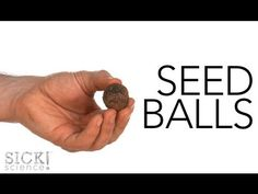 Seed Balls - A fun way to disperse seeds. Science Tricks, At Home Science Experiments, Science Lesson Plans, Science Videos, Mad Science, Science Lessons, Life Science, Plant Science, Stem Science