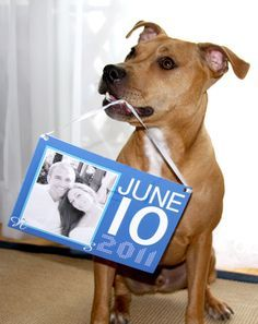 save the date with dog - Google Search