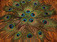 20 Peacock Feather Mats Peacock centerpiece mats Peacock by Axentz #peacock