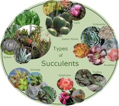 Types of Succulents - choose from thousands of different ones... Gardening | Succulent Plants