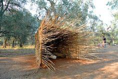 nido-dei-paduli