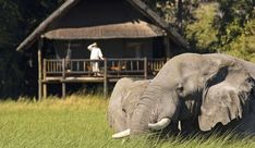 Khwai River lodge....in Botswana(africa)...stay in these lodges with wild animals around...! want to go to africa sooo bad.