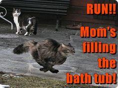 RUN!! http://cheezburger.com/9145167872