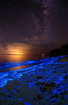 Bioluminescent plankton along the shore of Jervis Bay in Booderee National Park, New South Wales, Australia. It is said that it has the whitest sand in the world.