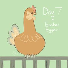 """Chicken A Day: Day 7 - Easter Egger """" An Easter Egger is any chicken that possesses the """"blue egg"""" gene, but doesn't fully meet any breed standard defined in the American Poultry Association's (APA) standards, The name derives from the resemblance of..."""