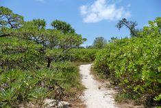 Insel erkunden auf dem Pfad durch Heron Island Great Barrier Reef, Island, Heron, Country Roads, Snorkeling, Travel Report, Explore, Nature, Travel
