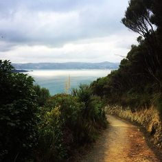 'Every path leads somewhere. And sometimes that path has an exhausting amount of incline, but it is always worth the view!  #sojournerlife #fernandpetal #fernandpetalonthemove #travelblogger #travel #newzealand #travelnz #tramping #hiking #barelymadeit #travelphotography #water #nature #naturephotography #outdoors #outdoorwomen #writerslife #writer #writerscommunity #writingcommunity #blogger #bloggerlife #bloggercommunity' by @bwiddi. What do you think about this one?  #partyplanner…