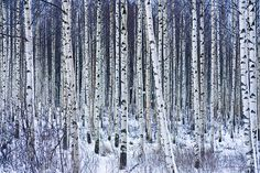Outlined trees by markusaso, via Flickr
