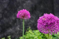En vakker hage må ikke kreve mye vedlikehold. Med riktig jord og beplantning kan hagen bli lettstelt. Vi viser deg hvordan