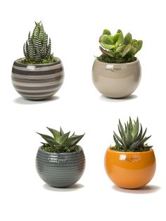 Nordic Mini Magnet Succulent Garden, Set of 3