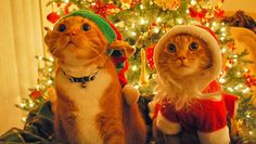 cats in front of Christmas tree