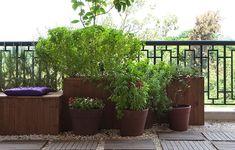 Na varanda do apê também pode ter vaso grandão! Ao lado do banco de madeira, o vaso de barro tem planta Sete-Ervas e a caixa de madeira tem manjericão. Piso com pedriscos e pisadas de madeira pínus de reflorestamento. Projeto do paisagista Roberto Riscala