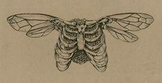 Sara Suppan Untitled, Pen and Ink, Kritzelei Tattoo, Tattoo Drawings, Art Drawings, Pixie Tattoo, Tummy Tattoo, Indie Drawings, Sternum Tattoo, Forearm Tattoos, Tattoo Sketches