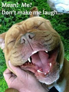 Silly Pitties!