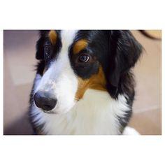 おはようランダ  今からの予定 :  日向ぼっこと骨カーミカミ 母も片付けやめてそれやりたい . .  #berner #bigdog #bernese #bernersennen #berneroftheday #bernesemountaindog #dog #dailydog #dog_features #dogoftheday8 #dogofinstaworld #iflmydog #instadog #instadogmagazine #excellent_dogs #excellent_puppies #worldwidedogs #lacyandpaws #バーニーズマウンテンドッグ #バニ部 . by dossowl
