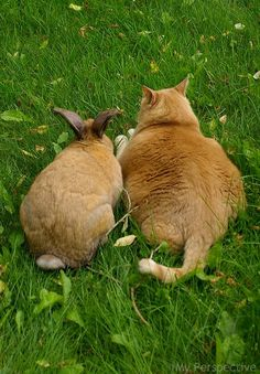 """""""A Bunny Rabbit And Pussy Cat ~ Well!  What Do You Think of That?!"""""""