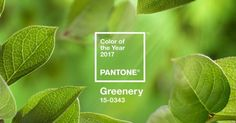 "Decorating with ""Greenery"" the @pantone Color of the Year!"