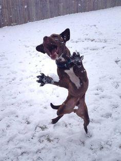 funny dog pictures with captions jazz hands Dog Breeders Guide lustige Hundebilder mit Bildunterschriften Jazz Hands Dog Breeders Guide Dog Quotes Funny, Funny Animal Jokes, Cute Funny Animals, Funny Cute, Funny Dogs, Super Funny, That's Hilarious, Animal Memes, Funny Dog Videos