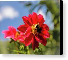 #AnnaMatveeva #Photographers #ForSale #FineArtAmerica #FineArtPrints #ArtHome #Artdecor #Decor #Homedecor #Beautiful #Dahlia #Nature #Flowers #Red #WoodPrints #MetalPrint #FogFramedPrint  http://anna-matveeva.pixels.com/
