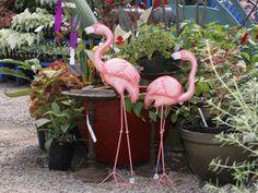 Flamingo - Yard art - pink flamingos