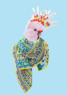 Collection de foulard Blazon de Natasha Coverdale