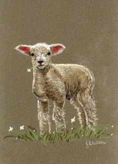 lamb paintings images | Sheep Images: Lamb Sheep Original Pastel Painting Redstreake