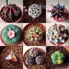 Selección de los mejores consejos para fertilizar cactus y lograr flores hermosas y cactus fuertes.