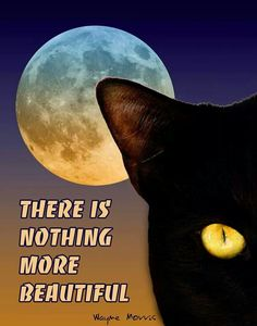Both are beautiful. Full moons and black cats.