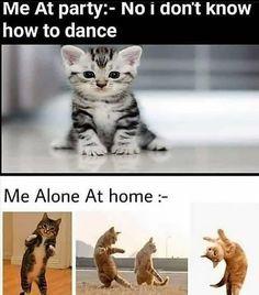 Funny Cat Memes – Cat Funny Memes Download – Funny Cat Captions
