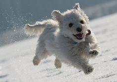 Mooie actiefoto van een Duits hondje in de sneeuw
